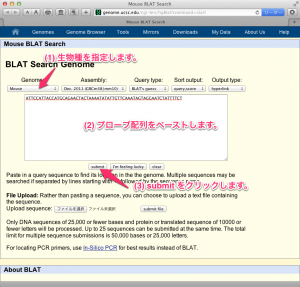 BLAT による検索。