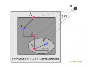 シグナル伝達系のパスウェイに描かれる情報の範囲。