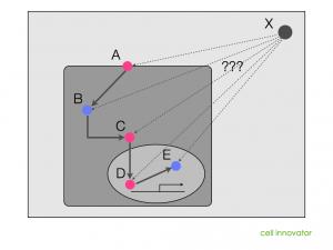 パスウェイやネットワーク図に当てはめて、遺伝子Xを探す。