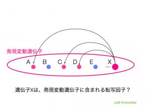 遺伝子Xは、発現変動遺伝子に含まれる転写因子と仮定。
