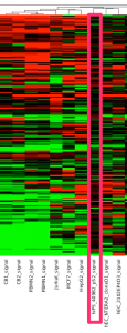 TGF-beta シグナリングのクラスタリング結果のうち、がん細胞に近いクラスター。