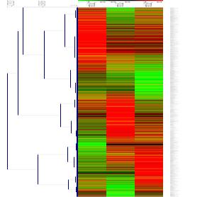 ratio のヒートマップ。遺伝子方向にクラスタリングを適用。